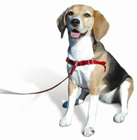 Sensible Harness for dogs product review